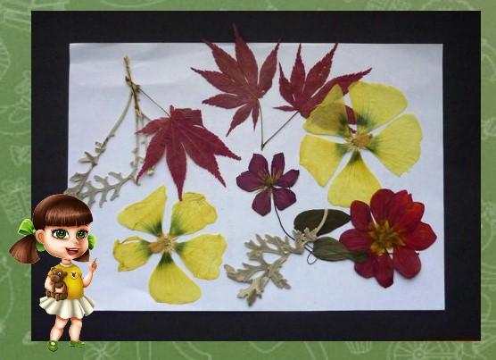 Фото гербария из цветов 3