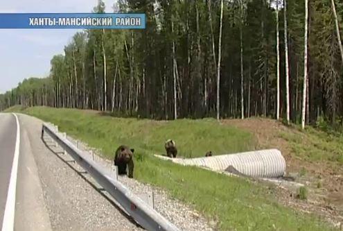 medvedi2 (1)