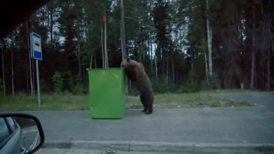 medvedi2
