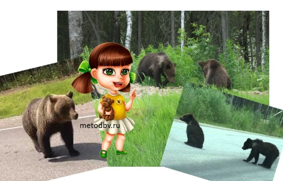 opasno-medvedi