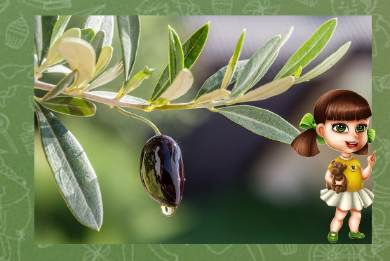 маслина