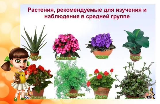 рекомендуемые растения для сада