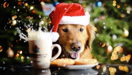 Новый год - год Желтой Собаки