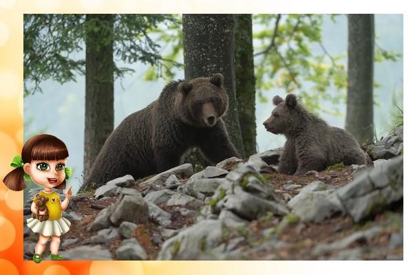 медведица и медвежата