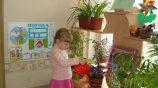 Темы по самообразованию для воспитателей: экология и экологическое воспитание в ДОУ