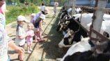 Экскурсии для детей на молочную ферму