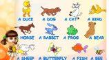 Запоминать английские слова лучше с наглядностью